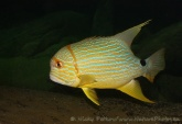 WildLife Photos of Fish,